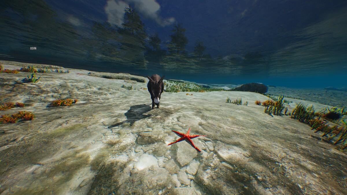 Lieber ins Meer als sich fangen zu lassen...