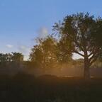 Früh am Morgen